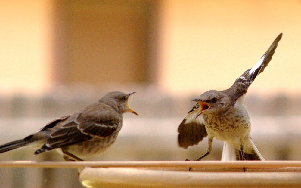 7 câu đừng nói lúc đang tức giận với người mình yêu thương