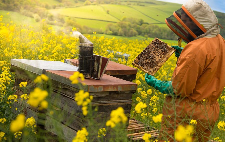 Thông tin 75% mật ong chứa thuốc trừ sâu là không đúng
